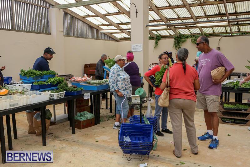 Farmers-Market-Bermuda-November-28-2015-43