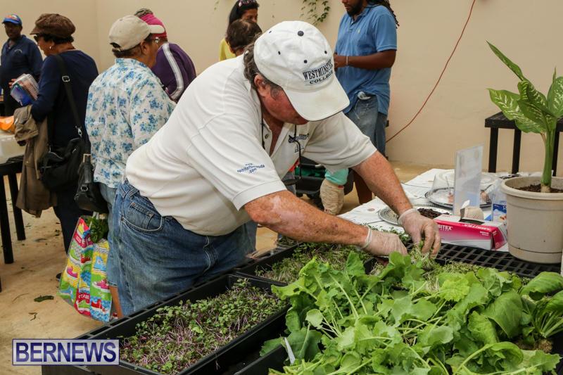 Farmers-Market-Bermuda-November-28-2015-46