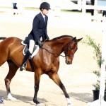 Horse Show Bermuda Nov 26 2015 (1)