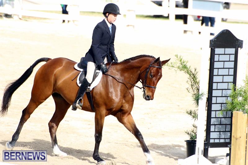 Horse-Show-Bermuda-Nov-26-2015-1