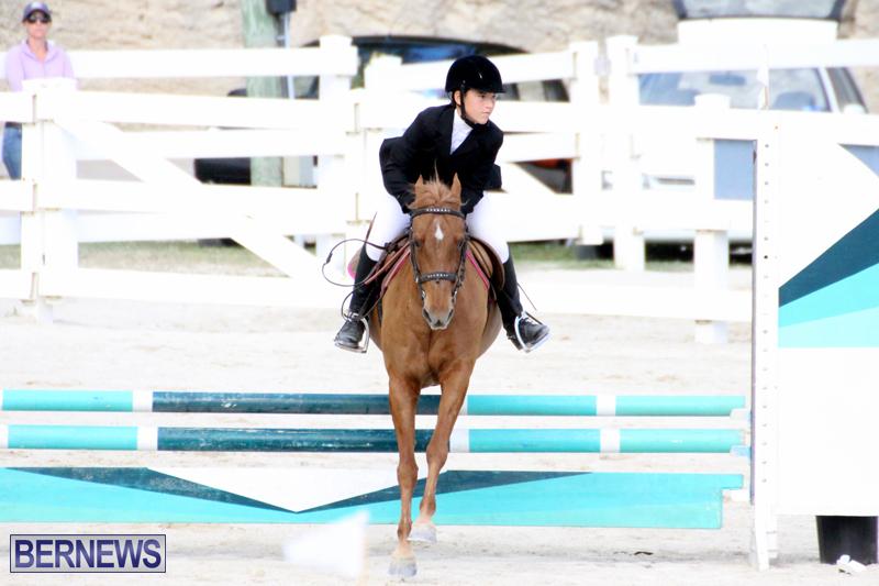 Horse-Show-Bermuda-Nov-26-2015-11