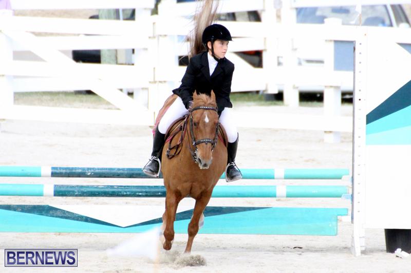 Horse-Show-Bermuda-Nov-26-2015-12