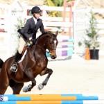 Horse Show Bermuda Nov 26 2015 (15)
