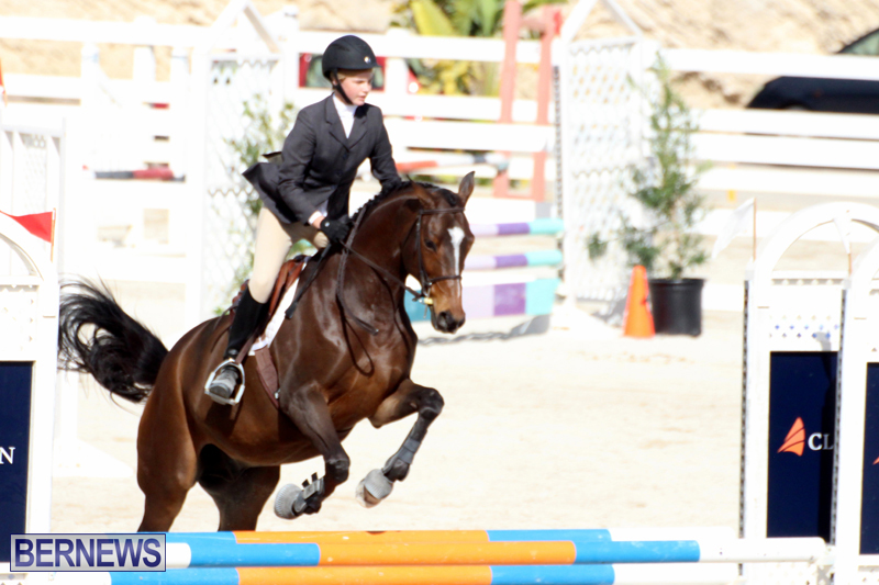 Horse-Show-Bermuda-Nov-26-2015-15