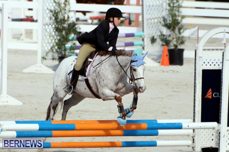 Horse-Show-Bermuda-Nov-26-2015-19