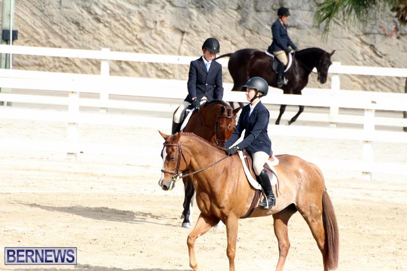 Horse-Show-Bermuda-Nov-26-2015-2