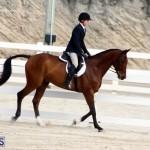 Horse Show Bermuda Nov 26 2015 (3)