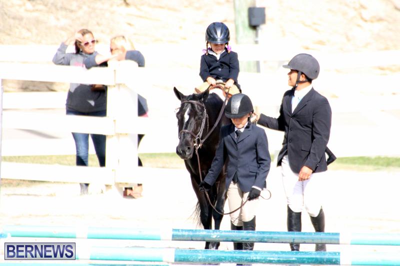 Horse-Show-Bermuda-Nov-26-2015-4