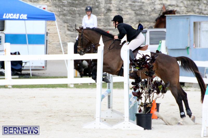 Horse-Show-Bermuda-Nov-26-2015-7