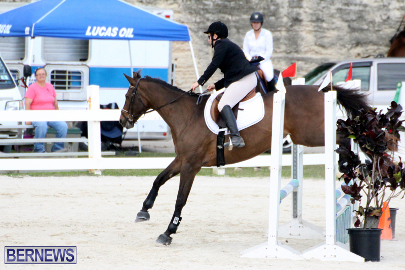 Horse-Show-Bermuda-Nov-26-2015-8