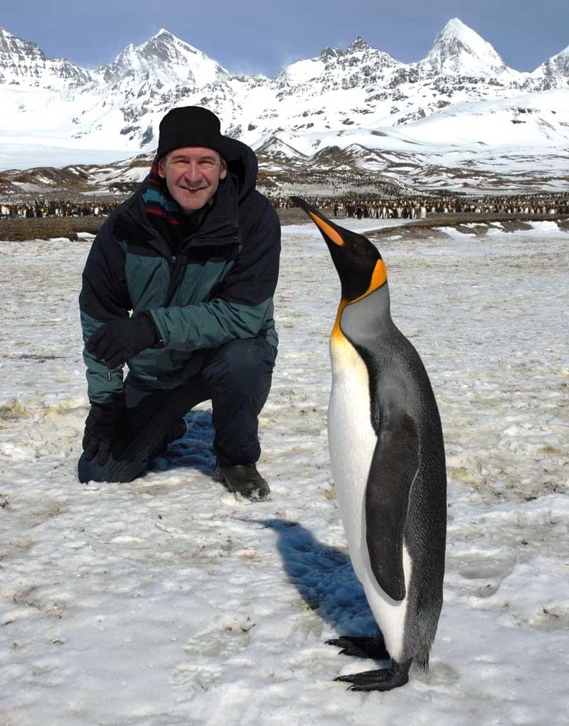 Nigel  penguin