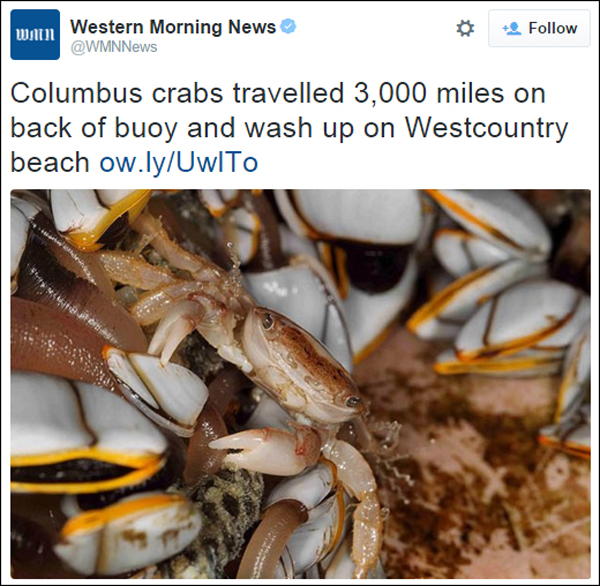Rare Columbus crabs wash up Bermuda November 2015