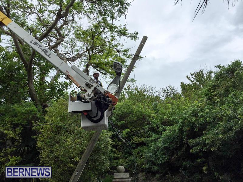 Utility Poles Bermuda, November 24 2015-7