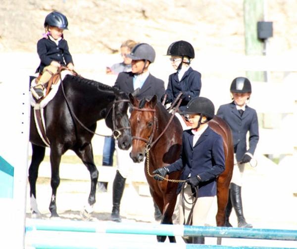 equestrian Bermuda Nov 24 2015