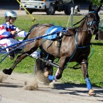 Bermuda Harness Pony Racing Dec 2015 (10)