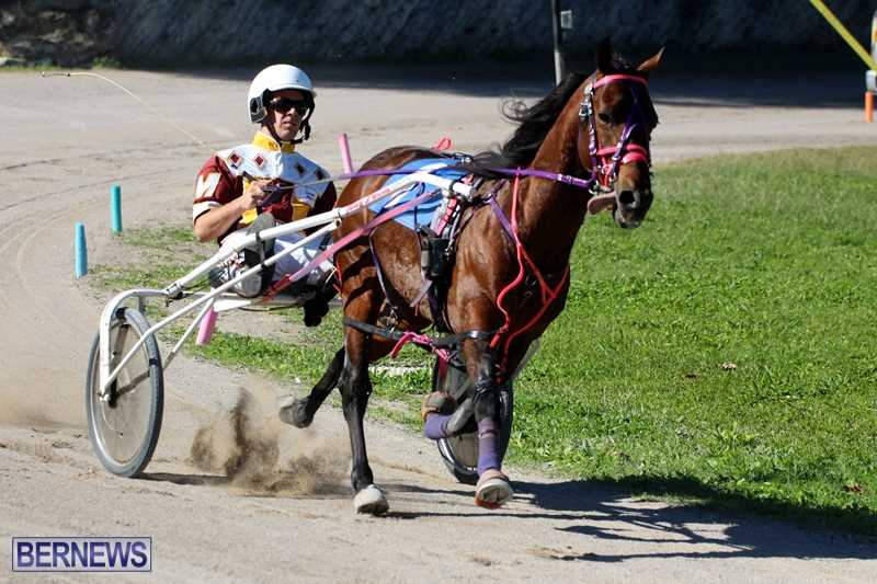 Bermuda-Harness-Pony-Racing-Dec-2015-11