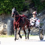 Bermuda Harness Pony Racing Dec 2015 (12)