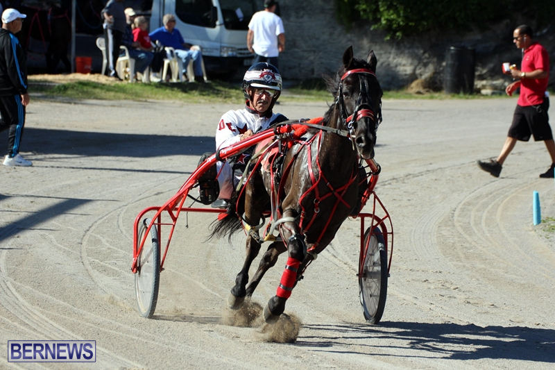 Bermuda-Harness-Pony-Racing-Dec-2015-15