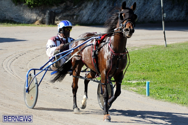 Bermuda-Harness-Pony-Racing-Dec-2015-19