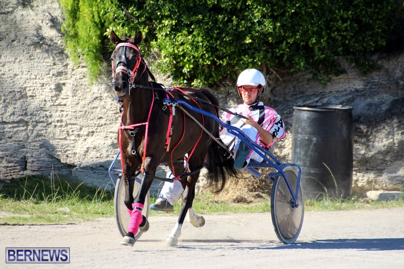 Bermuda-Harness-Pony-Racing-Dec-2015-2