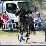 Bermuda Harness Pony Racing Dec 2015 (3)