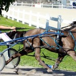 Bermuda Harness Pony Racing Dec 2015 (7)