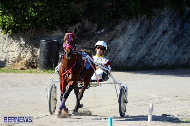 Bermuda-Harness-Pony-Racing-Dec-2015-8