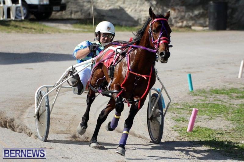 Harness-Pony-Racing-Bermuda-Jan-13-2016-11
