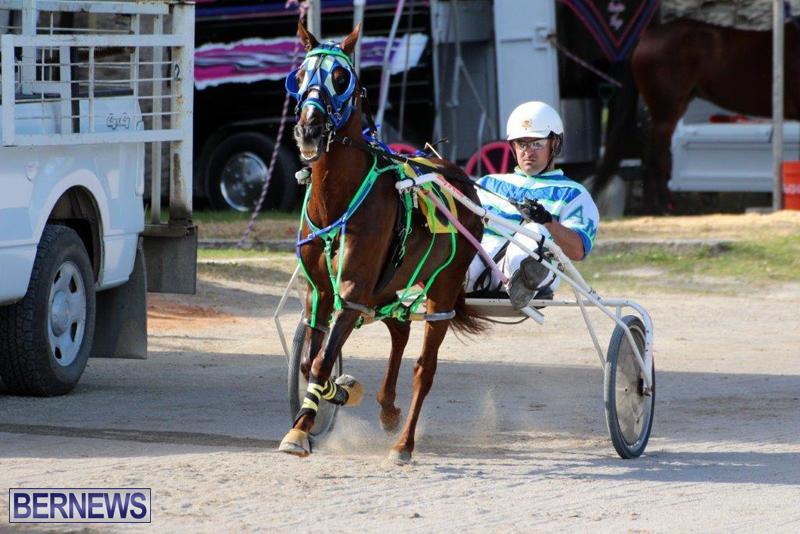 Harness-Pony-Racing-Bermuda-Jan-13-2016-18