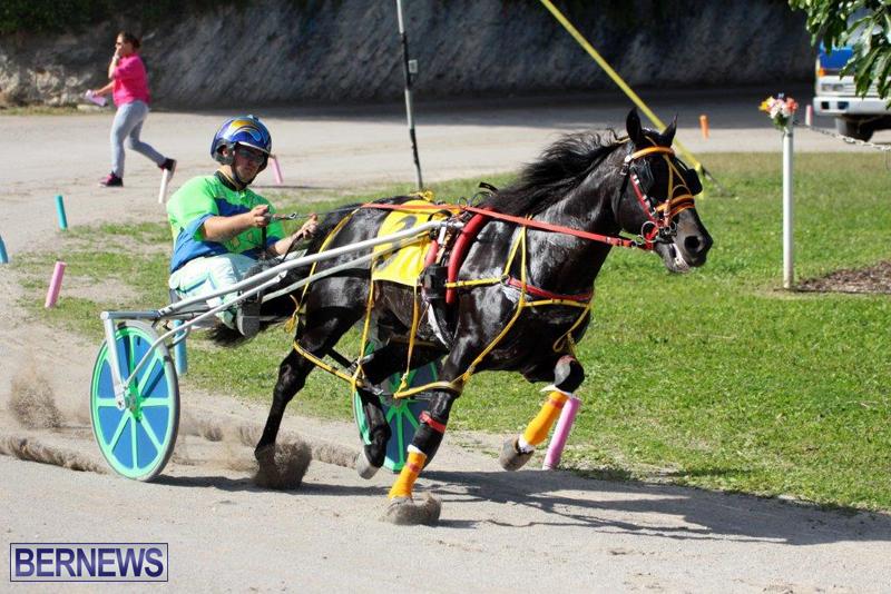 Harness-Pony-Racing-Bermuda-Jan-13-2016-19