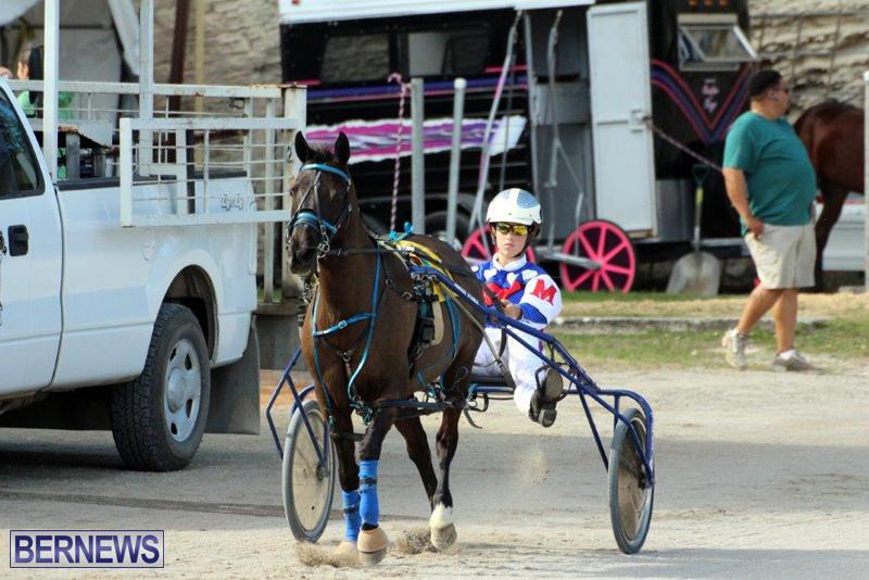 Harness-Pony-Racing-Bermuda-Jan-13-2016-4