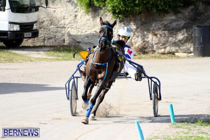 Harness-Pony-Racing-Bermuda-Jan-13-2016-5