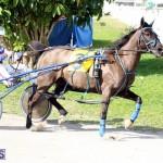 Harness Pony Racing Bermuda Jan 13 2016 (6)