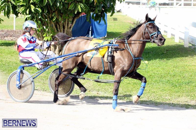 Harness-Pony-Racing-Bermuda-Jan-13-2016-6