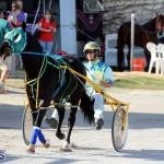 Harness Pony Racing Bermuda Jan 13 2016 (7)