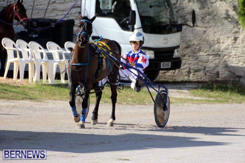 Harness-Pony-Racing-Bermuda-Jan-13-2016-8