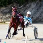 Harness Pony Racing Bermuda Jan 13 2016 (9)