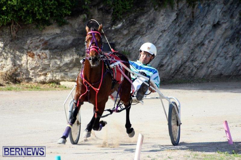 Harness-Pony-Racing-Bermuda-Jan-13-2016-9