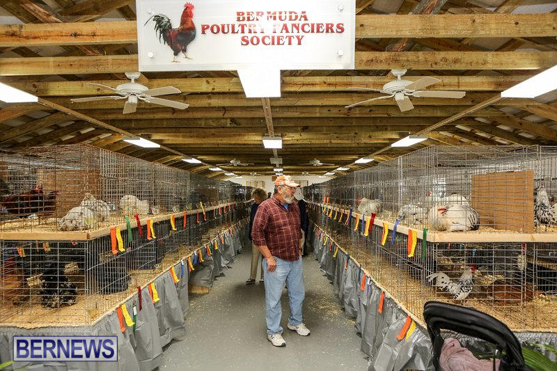 Poultry-Show-Bermuda-February-20-2016-1