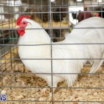 Poultry Show Bermuda, February 20 2016 (15)