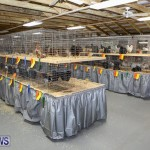 Poultry Show Bermuda, February 20 2016 (19)
