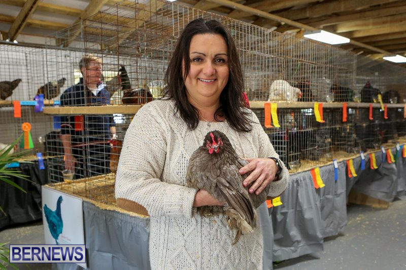 Poultry-Show-Bermuda-February-20-2016-2
