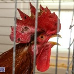 Poultry Show Bermuda, February 20 2016 (33)