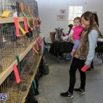 Poultry Show Bermuda, February 20 2016 (37)