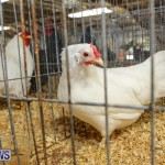 Poultry Show Bermuda, February 20 2016 (48)