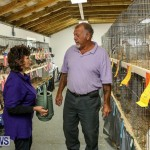 Poultry Show Bermuda, February 20 2016 (58)