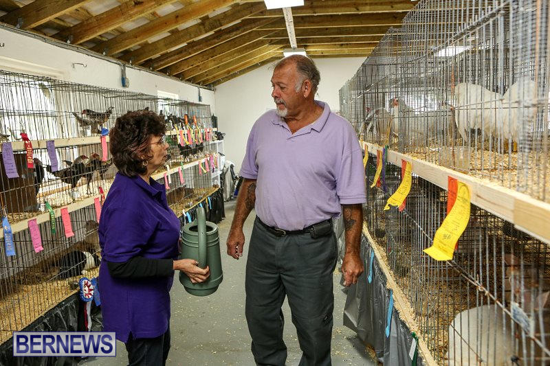Poultry-Show-Bermuda-February-20-2016-58
