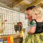 Poultry Show Bermuda, February 20 2016 (6)