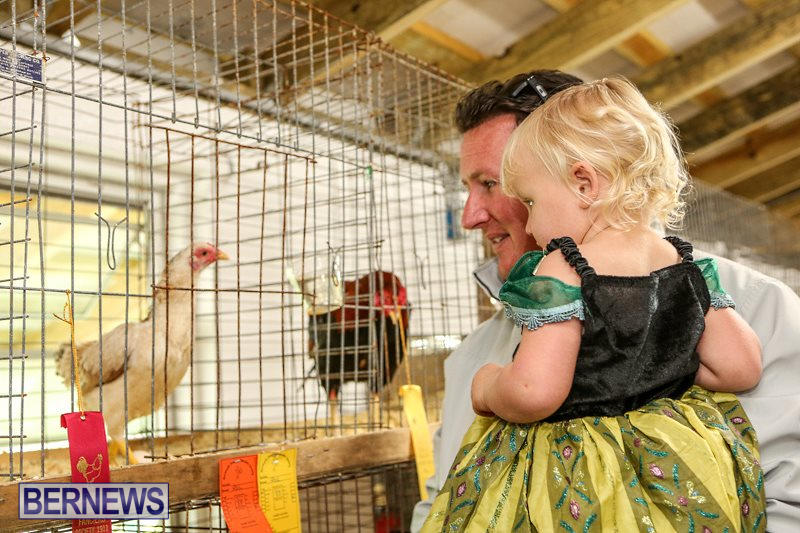 Poultry-Show-Bermuda-February-20-2016-6