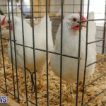 Poultry Show Bermuda, February 20 2016 (66)